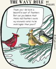 birdinsurance3.png