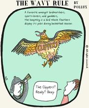 basketbird2.png